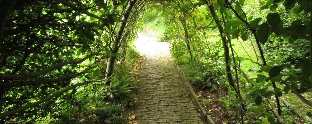 medžių tunelis