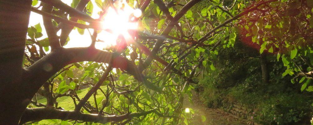 saulė miške