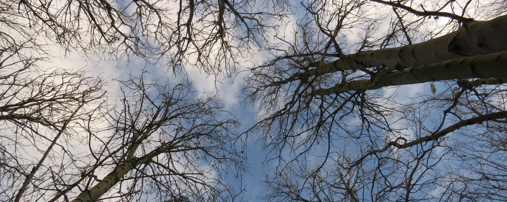 dangus miške
